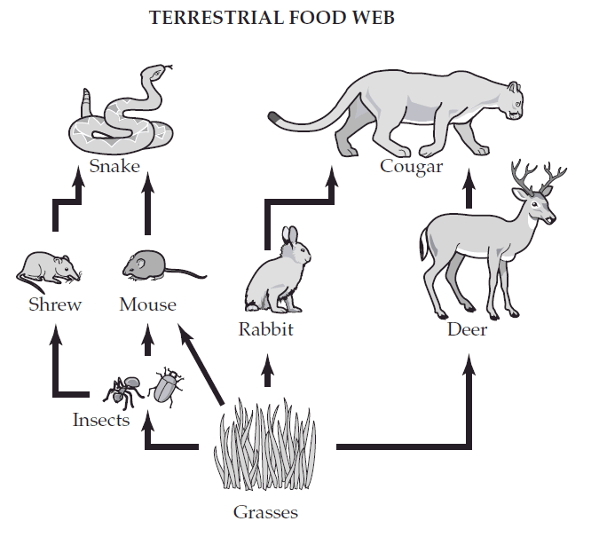arctic food chain diagram  arctic  get free image about