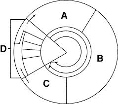 Index of testbankmedia6900images cell cycle diagramg ccuart Choice Image